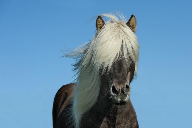 horse-1330690_640